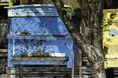 stock photo of beehive  - Swarm of bees fly to beehive - JPG