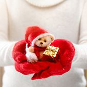 stock photo of teddy  - Little teddy bear in female hands in cozy mittens - JPG