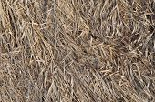 Dry Grass On The Ground
