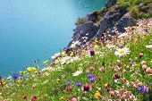 stock photo of wildflowers  - variety of wildflowers coastal landscape with turquoise water - JPG
