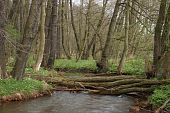stock photo of brook trout  - Trout brook Rossel in Saxony - JPG