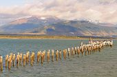 picture of natal  - King Cormorant colony - JPG