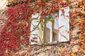 stock photo of ivy vine  - white window inside a vine - JPG