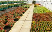 stock photo of convection  - flowers which are growing in a greenhouse in France - JPG
