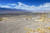 picture of cottonwood  - Ubehebe Crater in Death Valley National Park California - JPG