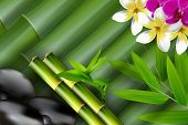 image of bamboo leaves  - Illustration of Bamboo - JPG