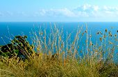 picture of wildflower  - Wildflowers and herbs in the mountains near the sea - JPG