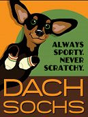 stock photo of dachshund dog  - Illustrated poster of a Dachshund dog and fictitious socks brand advertisement  - JPG