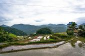 stock photo of luzon  - beautiful mountains with rice paddies in the mountains of the Philippine Islands  - JPG