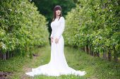 image of orchard  - Woman in a white dress in the orchard - JPG
