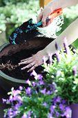 foto of  plants  - Planting flower garden - JPG