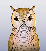 stock photo of owl eyes  - A handrawn picture of a brown owl with orange eyes - JPG