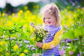 picture of country girl  - Child picking wild flowers in field - JPG