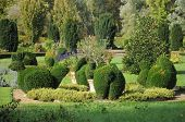 pic of angiosperms  - These are some of the common box topinaries which stand in the garden of the beautiful castle of Cormatin in Burgundy - JPG