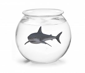 image of fishbowl  - a fishbowl with shark inside 3d illustration - JPG