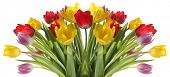 stock photo of flower-arrangement  - Fresh tulip bouquet - JPG