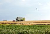 Combine Harvester Works In The Field. Harvest Season. Wheat Field poster