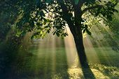 Sun Rays Nature Magic. Sun Rays Nature Effect Through Tree Leaves. Magical Nature In Back Yard. Sun  poster