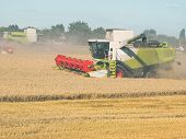 Wheat Harvesting With Combine Harvesters poster