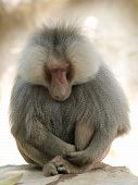 Animal Mammal Meditation Meditation Nature Monkeys Nature Pet Sleeping Sleep Wild Animals Zoo Animal poster