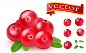 Realistic Juicy Ripe Red Berries Of Cranberries With Green Leaves On A White Background. 3d Realisti poster