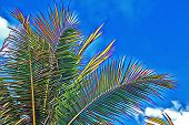 Coco Palm Tree Crown On Sky Background. Vibrant Palm Leaf On Blue Sky. Tropical Vacation Digital Ill poster