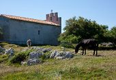 stock photo of headstrong  - Two Donkey grazing next to the church - JPG