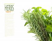 Herbs With Copyspace