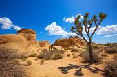 picture of arid  - Joshua Tree National Park Jumbo Rocks in Yucca valley Mohave Desert California USA - JPG