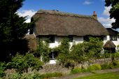 stock photo of english ivy  - English thatched roof cottage covered in ivy surrounded by trees and garden - JPG