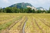 stock photo of mountain chain  - Landscape of rice field just harvested behind the plantation is mountain chain - JPG