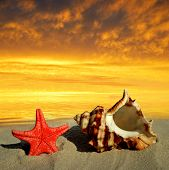 picture of conch  - Conch shell with starfish on beach in the sunset - JPG