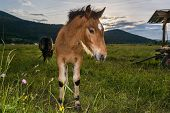 pic of colt  - Colt with a setting sun in the background - JPG