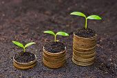 stock photo of sustainable development  - trees growing on three piles of coins