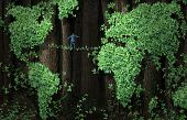 picture of vines  - Global growth risk business concept as a businessman walking on a tightrope made from vines in a background of forest tree leaf vine shaped as a world map - JPG