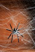 picture of cobweb  - Cobweb with spider on wooden background - JPG