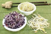 picture of soybean sprouts  - different varieties of sprouts on a bast mat - JPG