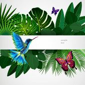 image of colibri  - Tropical leaves with birds - JPG
