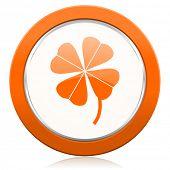 image of four leaf clover  - four - JPG