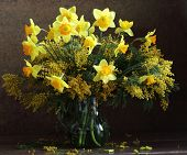 stock photo of mimosa  - Bouquet from spring narcissuses and a yellow mimosa in a transparent jug - JPG