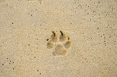 pic of dog footprint  - Dog Trail On The Beach as background - JPG