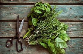 image of food plant  - Fresh herbs - JPG