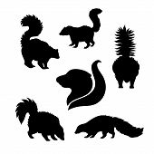 picture of skunk  - Skunk icons and silhouettes - JPG