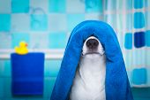 Dog In Shower  Or Wellness Spa poster