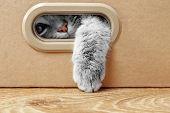 Cute cat in cardboard box poster