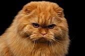 grumpy cat poster