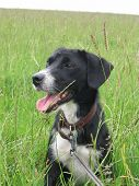 Cute Black Dog In A Meadow In The Summer Time poster