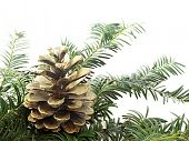 Christmas decoration with golden pine cone 1102_09
