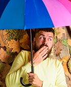 Fall Atmosphere Attributes. Hipster With Beard Mustache Expect Rainy Weather Hold Colorful Umbrella. poster