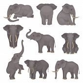 Flat Vector Set Of Elephants In Different Poses. African Of Asian Animals With Large Ears And Long T poster